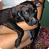 Adopt A Pet :: Delilah - North Brunswick, NJ