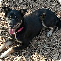 Adopt A Pet :: Chula - Baltimore, MD