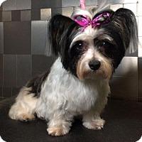 Adopt A Pet :: Tara - McKinney, TX