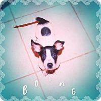 Adopt A Pet :: SKIPPER - Silly Puppy! - Chandler, AZ