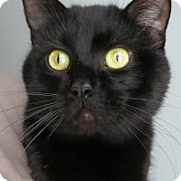 Adopt A Pet :: Nigel - Menomonie, WI