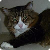 Adopt A Pet :: Jonny - Hamburg, NY