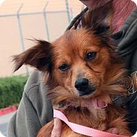 Adopt A Pet :: Sugar - Palmdale, CA