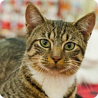 Adopt A Pet :: Terry - Great Falls, MT