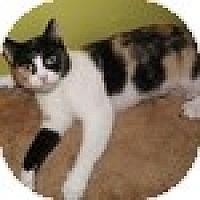 Adopt A Pet :: Clea - Vancouver, BC