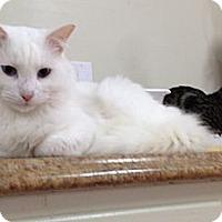 Adopt A Pet :: Orb - Monroe, GA