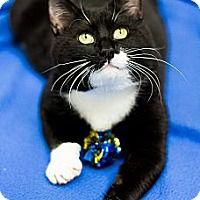 Adopt A Pet :: Carson - Chicago, IL