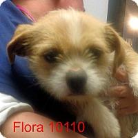 Adopt A Pet :: Flora - baltimore, MD