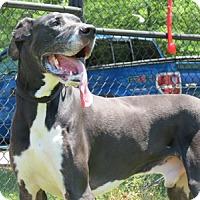 Adopt A Pet :: Murphy - Hanover, MD
