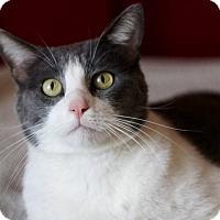 Adopt A Pet :: Remington AKA Remy - San Antonio, TX