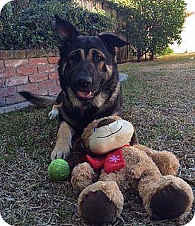 German Shepherd Dog Mix Dog for adoption in Van Nuys, California - DEAN