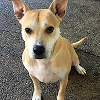 Adopt A Pet :: CECE - fun active 'talker' - Bainbridge Island, WA