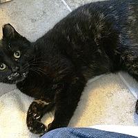 Adopt A Pet :: Peony - Durham, NC