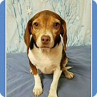 Adopt A Pet :: Mamie meet me 3/10 - Manchester, CT
