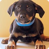 Adopt A Pet :: Alvin - Waldorf, MD
