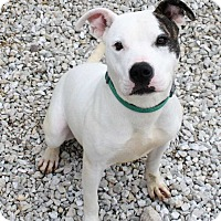 Adopt A Pet :: Spice - Fort Madison, IA