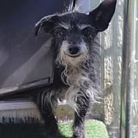Adopt A Pet :: Ellie - Kempner, TX