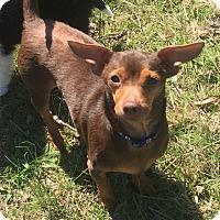 Adopt A Pet :: Dude (ETAA) - Spring Valley, NY