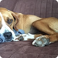 Adopt A Pet :: Rosie - St. Catharines, ON