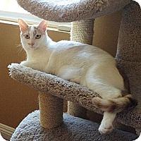 Adopt A Pet :: Cassie - Mission Viejo, CA