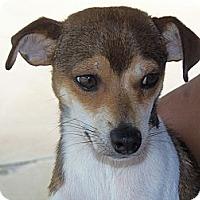 Adopt A Pet :: Major - Fort Valley, GA