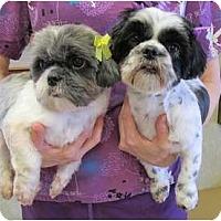 Adopt A Pet :: Thelma&Louise - Kingwood, TX