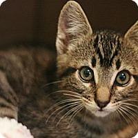 Adopt A Pet :: Petro - Canoga Park, CA