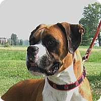 Adopt A Pet :: Anna Leigh - Dayton, OH