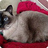Adopt A Pet :: Roxie - Laguna Woods, CA