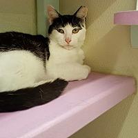 Adopt A Pet :: Princess IV - Westbury, NY