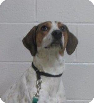 Hound (Unknown Type)/Coonhound (Unknown Type) Mix Dog for adoption in LaGrange, Kentucky - Silva