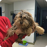 Adopt A Pet :: Potter-pending adoption - Manchester, CT