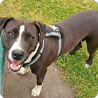 Adopt A Pet :: Betty - Snow Hill, NC