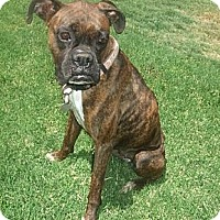 Adopt A Pet :: Lollipop - Scottsdale, AZ