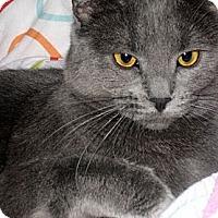 Adopt A Pet :: Stella - Alexandria, VA