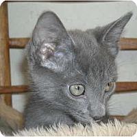 Adopt A Pet :: Sebastian & Snoopy - Arlington, VA