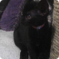 Adopt A Pet :: Uhura - St. Louis, MO