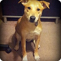 Adopt A Pet :: NIKE - Higley, AZ
