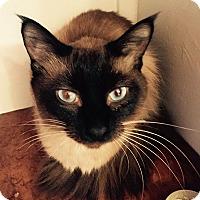 Adopt A Pet :: Java - Davis, CA