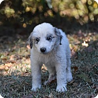 Adopt A Pet :: Patch - Groton, MA