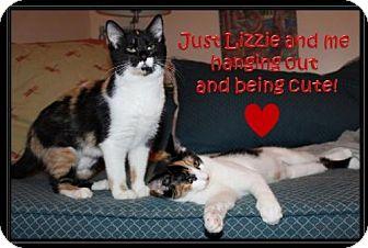 Calico Kitten for adoption in Orlando, Florida - Izzie (ML) 8.31.16