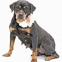 Adopt A Pet :: GiGi - New Smyrna Beach, FL