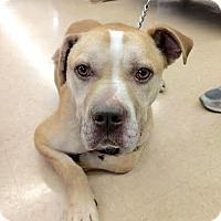 Adopt A Pet :: Jace - Maryville, TN