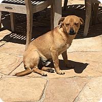 Adopt A Pet :: Fred - San Diego, CA