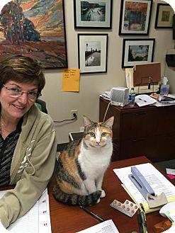 Calico Kitten for adoption in Atlanta, Georgia - Gracie
