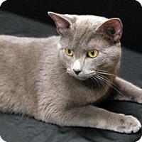 Adopt A Pet :: Alexander - Newland, NC
