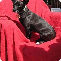 Adopt A Pet :: Reney - Oakland, AR
