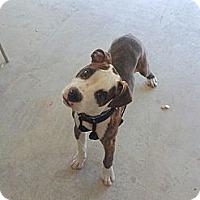 Adopt A Pet :: Pumpkin - Cherry Hill, NJ