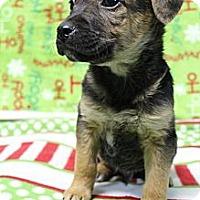 Adopt A Pet :: Phoenix - Wytheville, VA