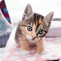 Adopt A Pet :: Zelda - Shelton, WA